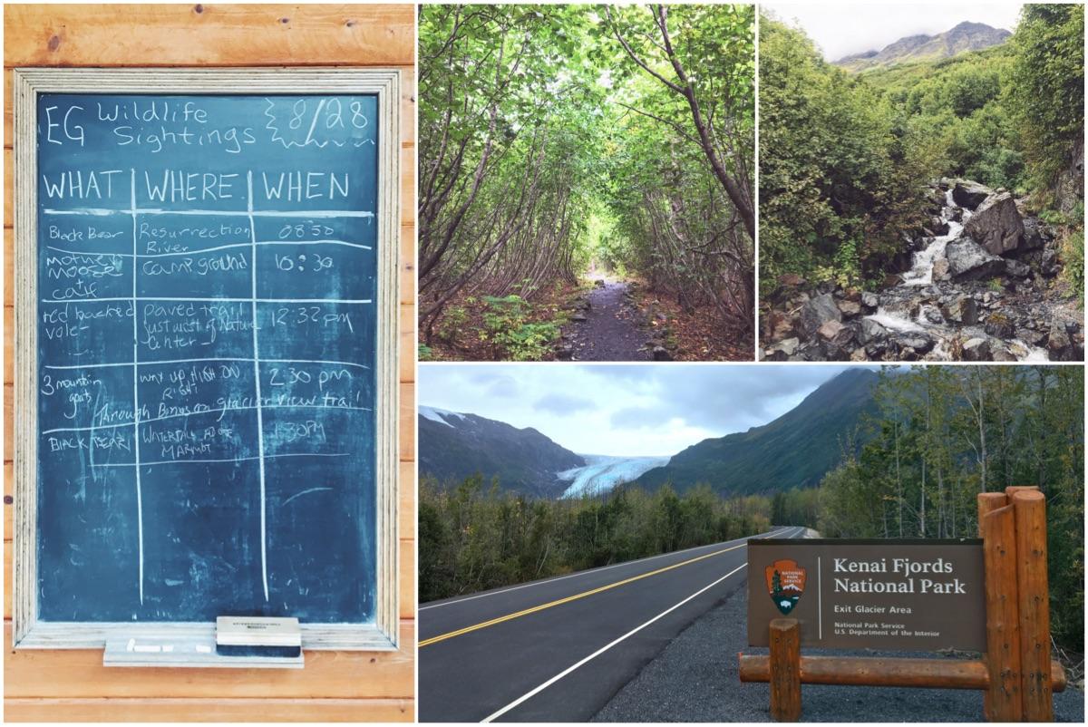 Visitare il Ghiacciaio Exit - Itinerario di 10 giorni in Alaska - penisola del Kenai